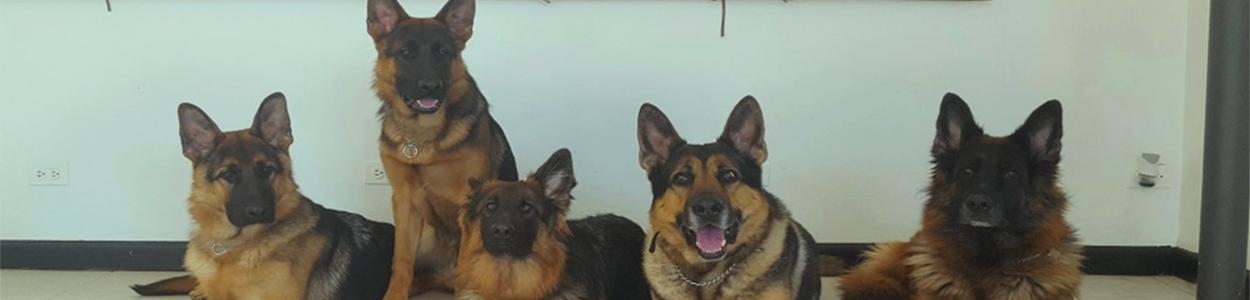 Doggie _Daycare_