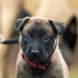 3 Things to Keep in Mind When You Get a Puppy