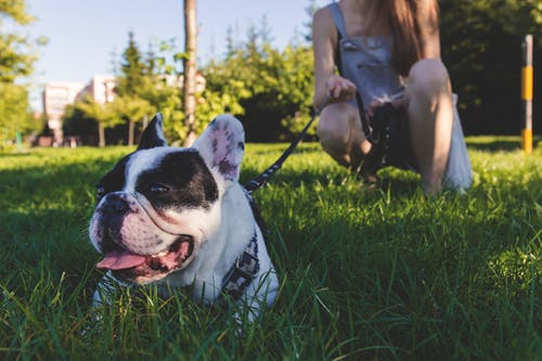 Helpful Tips for Training Your Dog